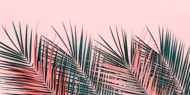 Variaciones hojas de palma tropical vista plana superior