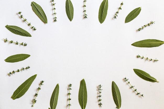 Varias hierbas frescas del jardín romero, salvia y hojas de tomillo se ponen planas con copyspace central sobre fondo blanco.