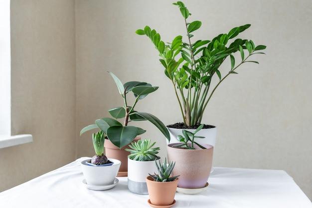 Varias plantas en diferentes macetas en la mesa. casa jardín interior. jardín verde en la habitación
