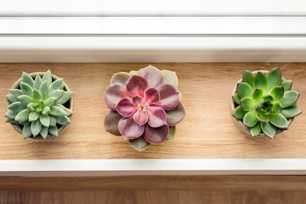 Varias plantas suculentas dispuestas junto a la ventana.