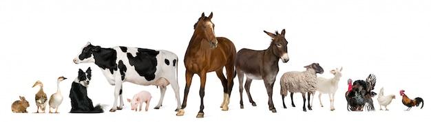 Variedad de animales de granja delante de fondo blanco.