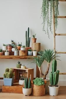 Variedad de cactus y suculentas para decoración del hogar.