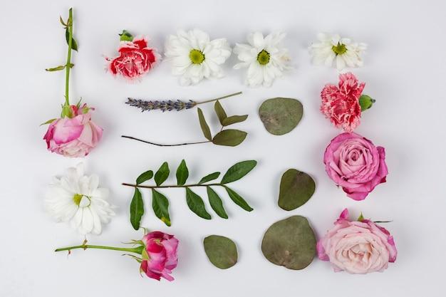 Variedad de flores con hojas sobre fondo blanco.