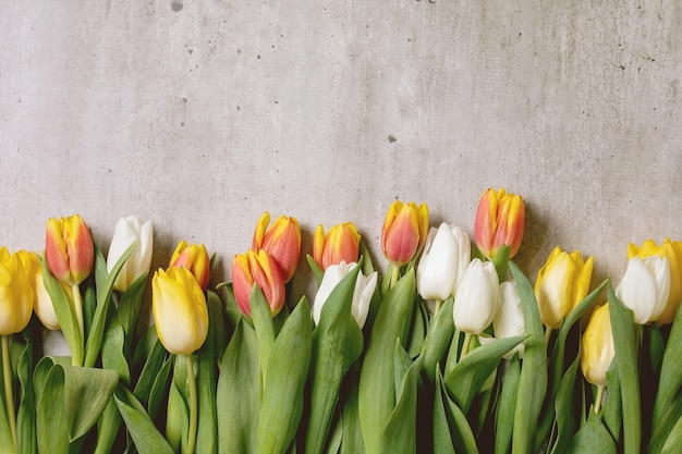 Variedad de flores de tulipanes
