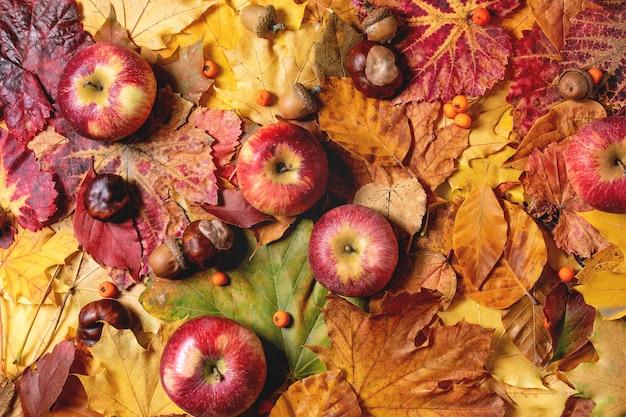 Variedad de hojas de otoño