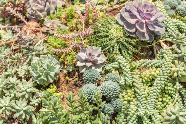 Variedad de plantas suculentas de agave cactus, primer plano