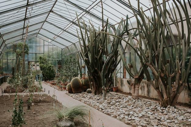 Variedad de plantas tropicales, cactus y suculentas en invernadero.