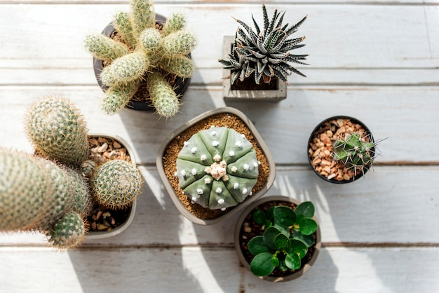 Varios cactus pequeños