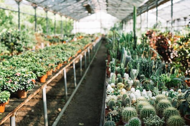 Varios cactus y plantas de flores en invernadero.