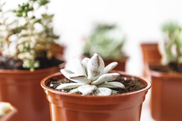 Varios cactus y plantas suculentas en macetas