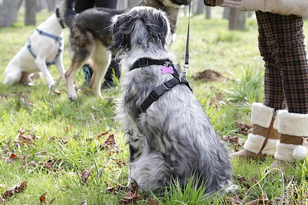 Varios perros y sus dueños en un parque para perros.