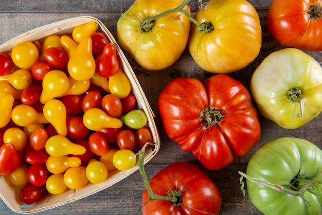 Varios tomates, pequeños y grandes, rojos y amarillos.