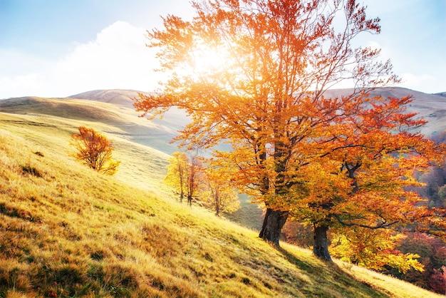 Vegetación de las tierras altas, verano modesto y colores inusualmente hermosos florece en otoño