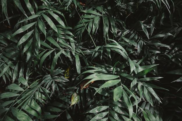 Vegetación verde