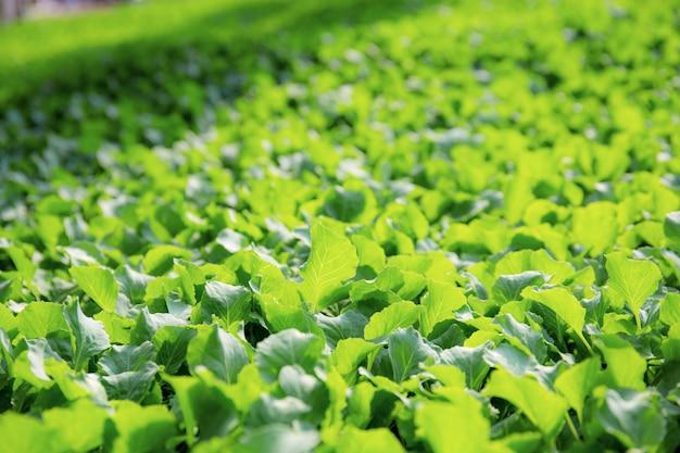 Vegetales orgánicos con fondo.