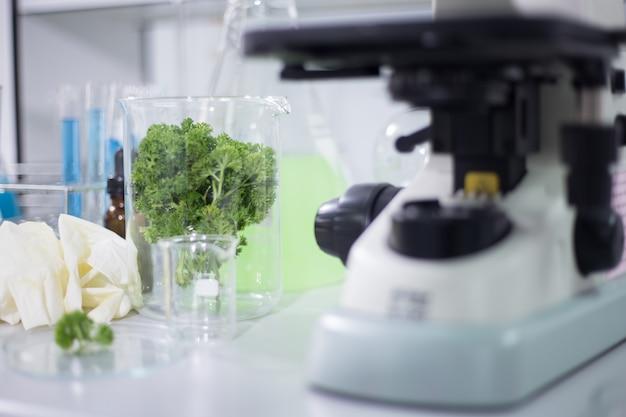 Vegetales orgánicos en la sala de ciencias.