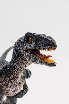 Velociraptor, dinosaurio sobre fondo blanco