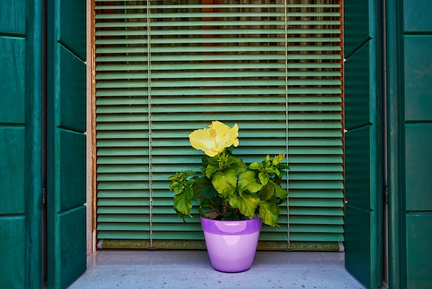 Ventana con persiana verde y flores amarillas en la olla. italia, venecia, burano