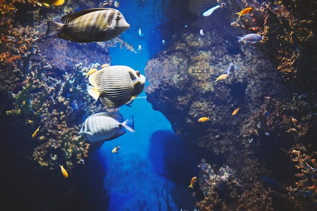 Ver bajo el agua de peces de mar de colores
