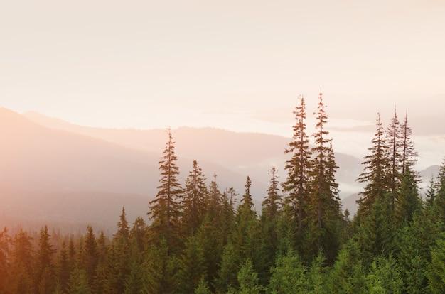 Ver en el bosque de montaña al atardecer