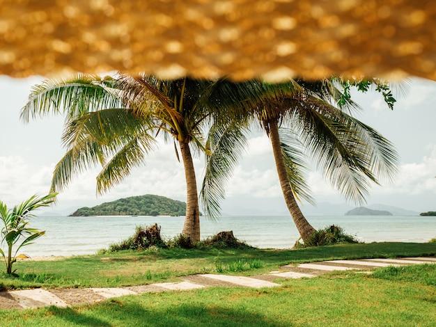 Ver en palmeras y playa tropical desde sombrero