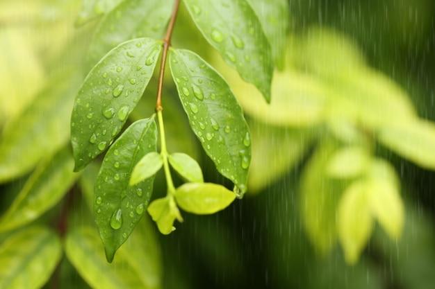 Ver a través de la ventana en días lluviosos. enfoque selectivo.