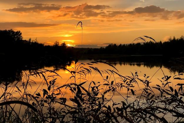 Verano colorido atardecer en el lago con nubes reflejadas en agua y siluetas de hierba en primer plano