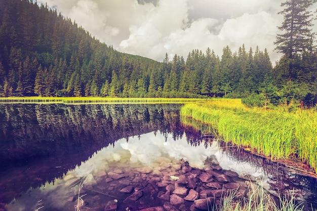 Verano montaña lago forrest