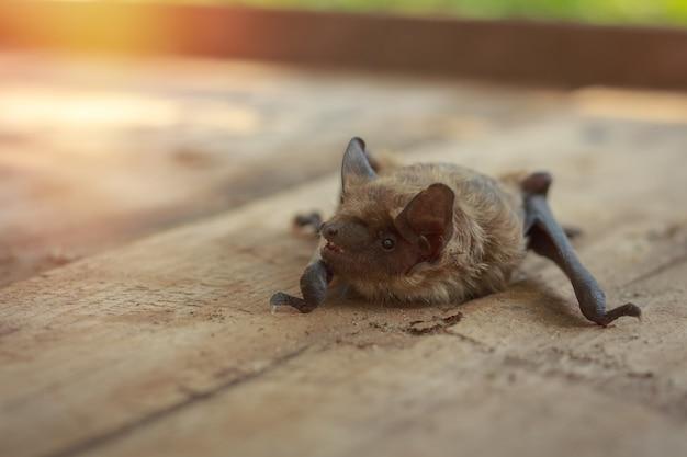 Un verdadero murciélago en la naturaleza.