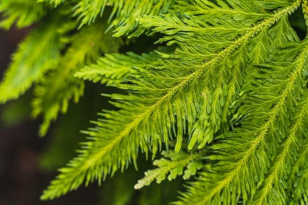Verde brillante borrosa estilo abstracto de hojas de plantas