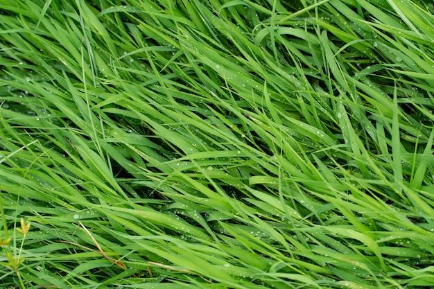 Verde, naturaleza, hierba, fondo, textura