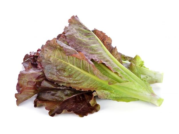 Verdura hidropónica, lechuga cos roja sobre fondo blanco