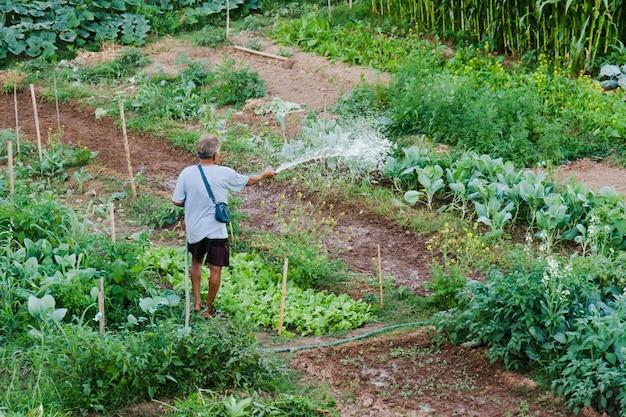 Verdura de riego del granjero en el campo de tailandia.