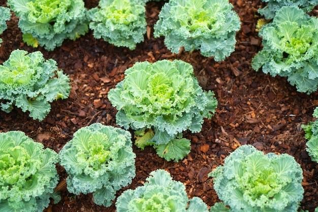 Verduras orgánicas para una buena salud.
