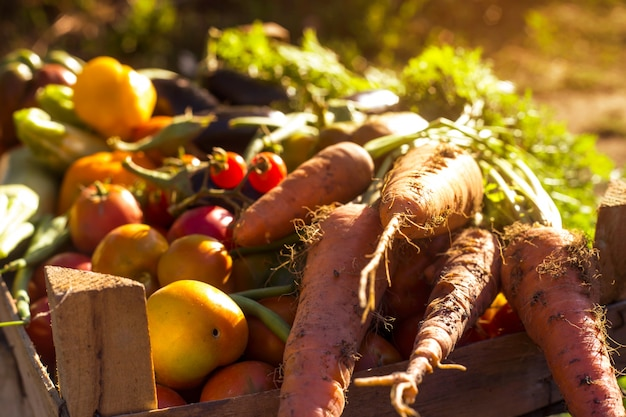 Verduras orgánicas del huerto familiar.