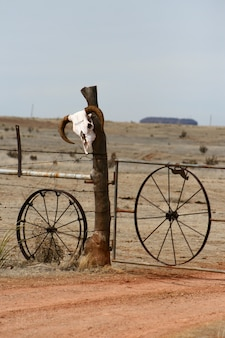 Vertical de un cráneo de vaca en una valla en una zona desértica en nuevo méxico