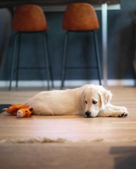 Vertical de un lindo perro shite y un animal de peluche amarillo tirado en el piso