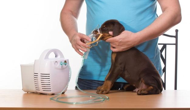 Veterinario y cachorro con inhalador