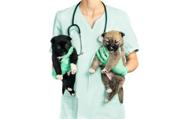 Veterinario y cachorro sonriente en la clínica aislado sobre fondo blanco.