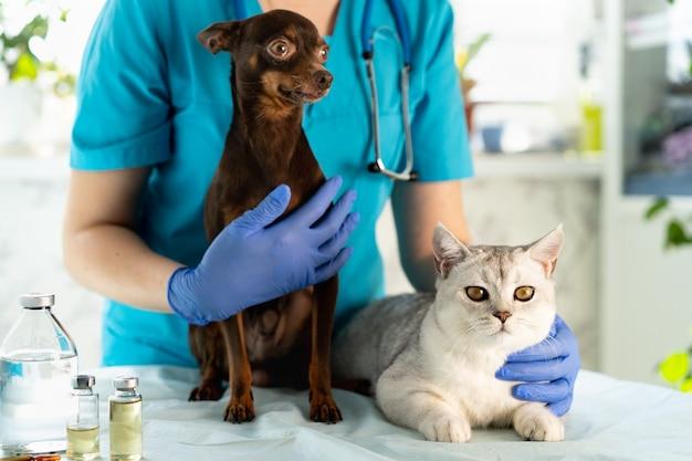 Veterinario examinando perros y gatos cachorros y gatitos en el médico veterinario chequeo de mascotas y vacunación