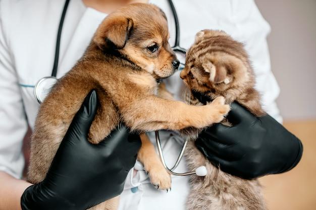 Veterinario en guantes negros con un perro y un gato en sus manos