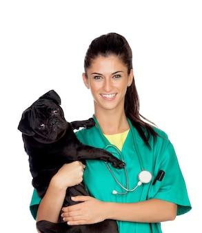 Veterinario morena con un perro pug aislado sobre fondo blanco