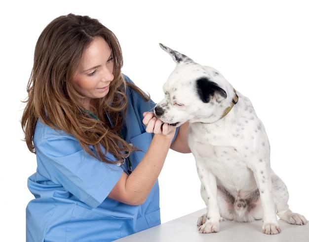 Veterinario con un perro para una revisión aislada sobre fondo blanco