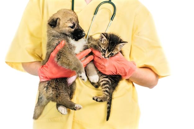 Veterinario sonriente y cachorro y gatito en clínica aislado sobre fondo blanco.