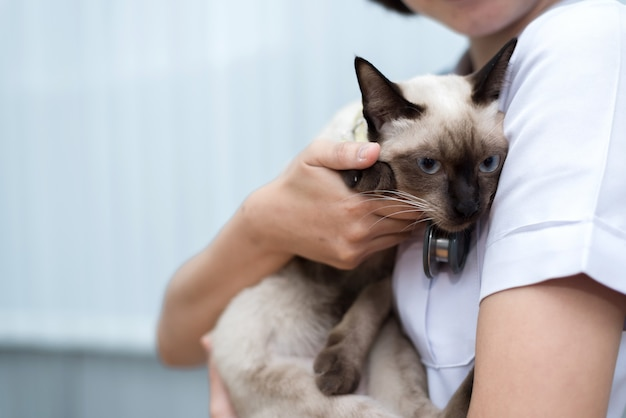 Veterinario utiliza estetoscopio para diagnosticar lindo gato
