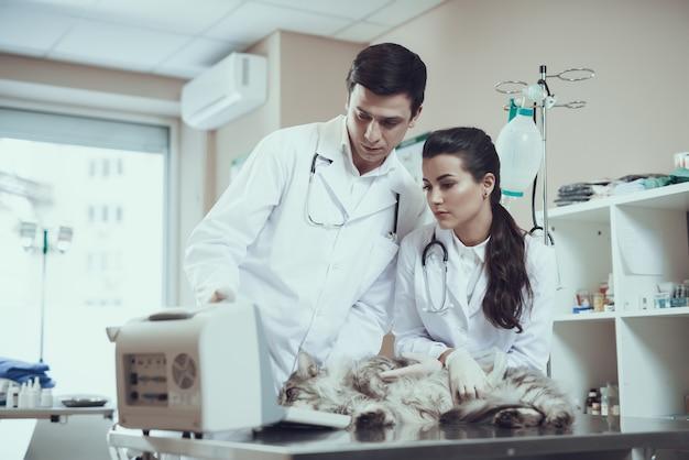 Veterinarios que examinan la ecografía del gato enfermo.