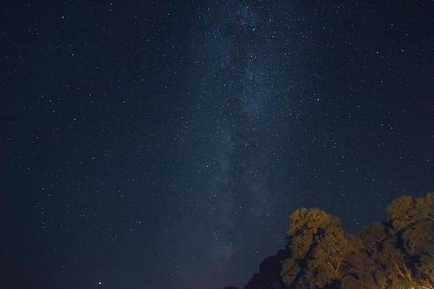 Vía láctea en el cielo estrellado con pinos
