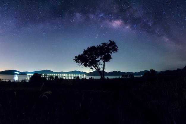 Vía láctea galaxia sobre el árbol.