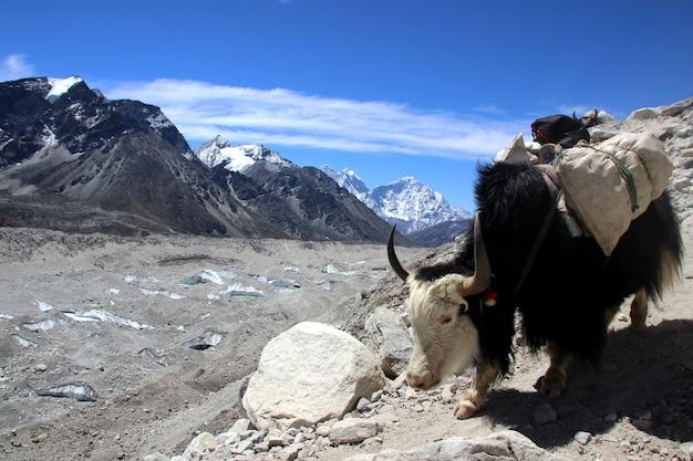 Viajando a nepal
