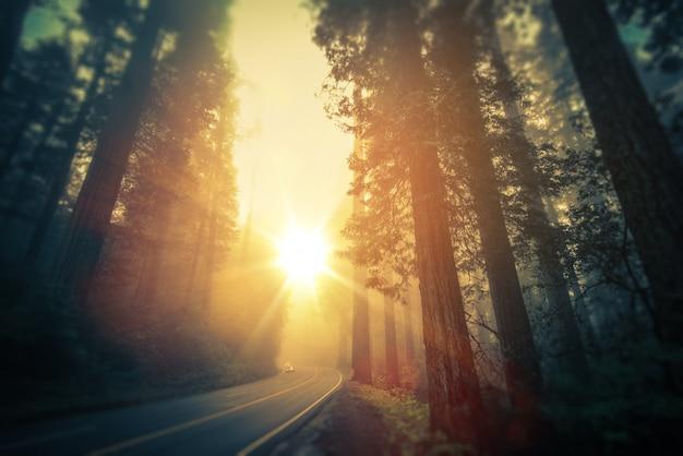 Viaje por carretera california redwood